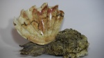 Flame Box Elder Burl Clam