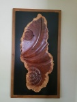 iRed Mallee burl wall hanging