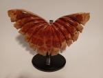 Madame butterfly.jpg
